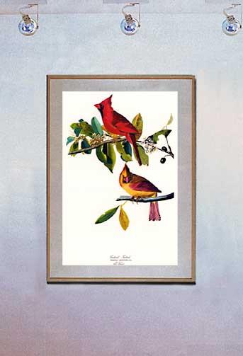 Cardinal-bird-birds-Art-Print-by-John-James-Audubon